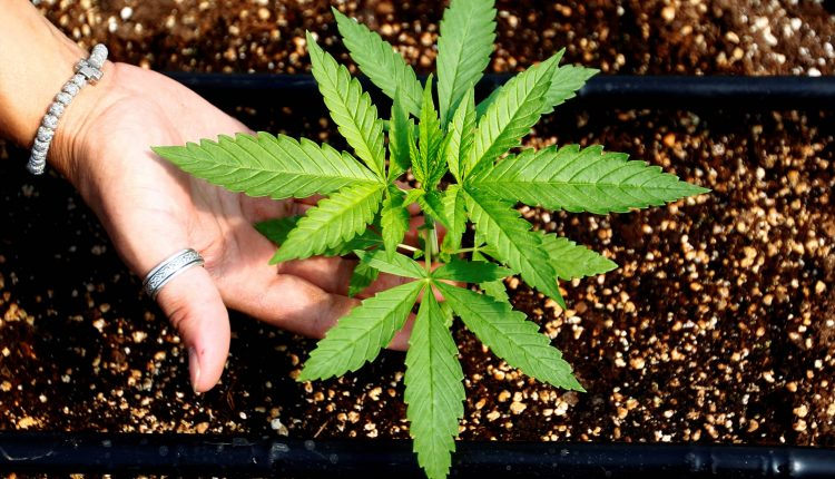 Cannabis stocks soar as Reddit crowd that spiked GameStop jumps