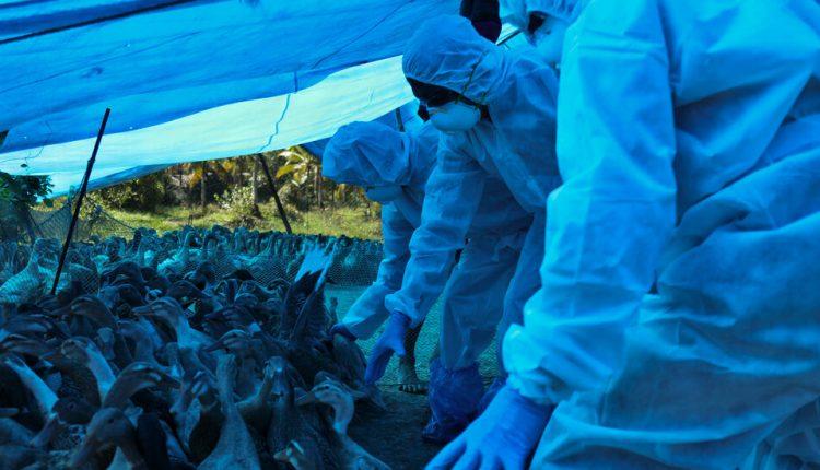 A New Bird Flu Jumps to Humans. So Far, It's