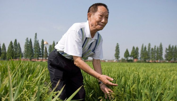 Yuan Longping, Plant Scientist Who Helped Curb Famine, Dies at