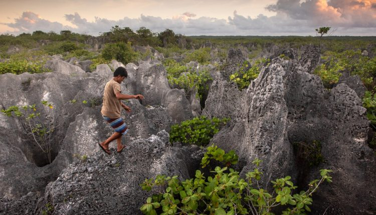 The Perilous Hunt for Coconut Crabs on a Remote Polynesian