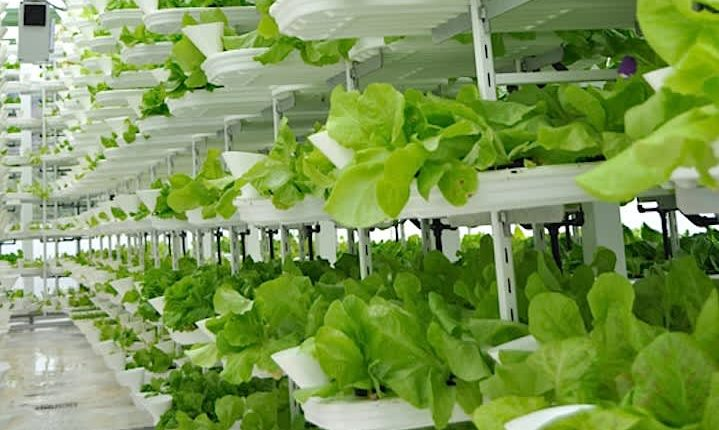 &ever CEO says indoor vertical farm will produce 1.5 tons