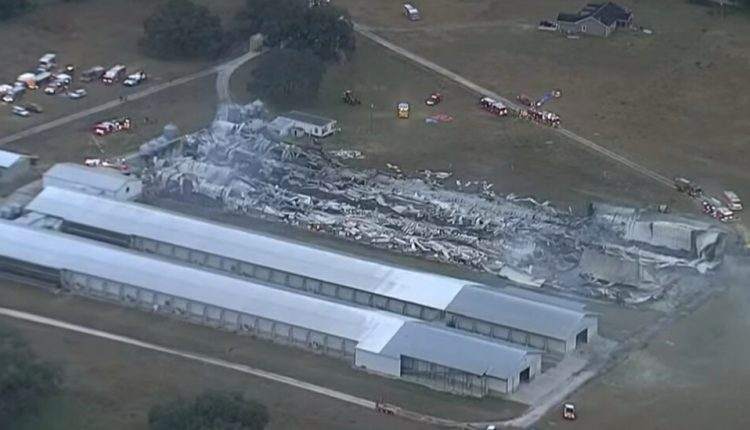 At Least 240,000 Chickens Are Killed in Fire at Florida