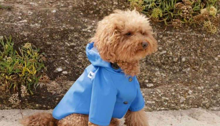 7 Modern Dog Outerwear Options To Keep Them Warm