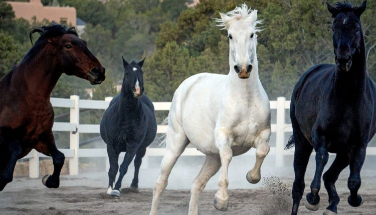 Can We Learn Anything From Horses?