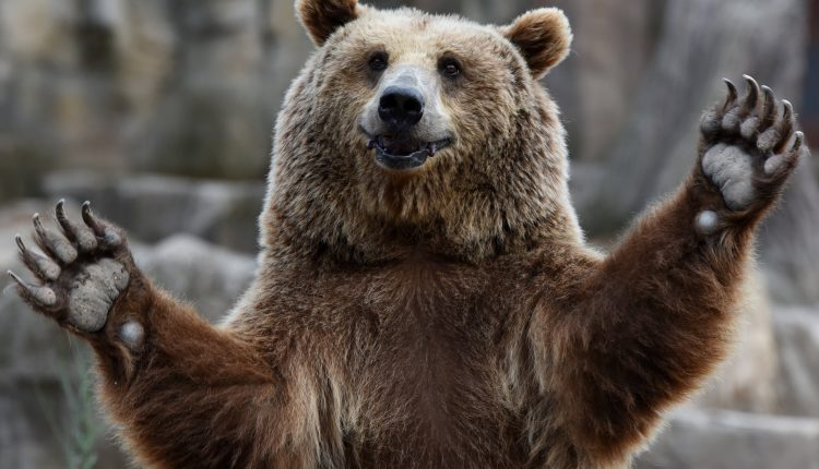 These stocks are already in a bear market amid Monday's